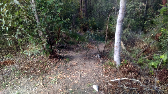 Steep trail in Raven St reserve