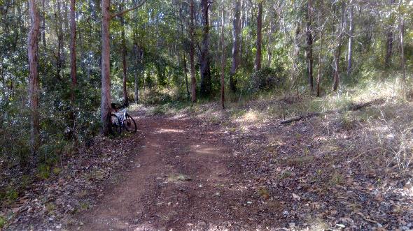 Trail on Lake Samsonvale