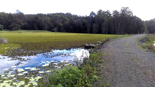 Aquatic vegetation on the Ewen Maddock Dam