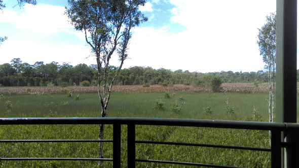 View from observation towerat Deagon Wetlands