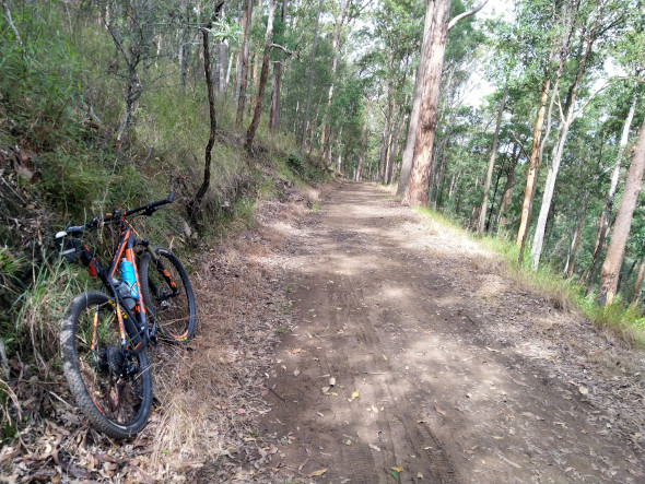 Ironbark Gully fire trail